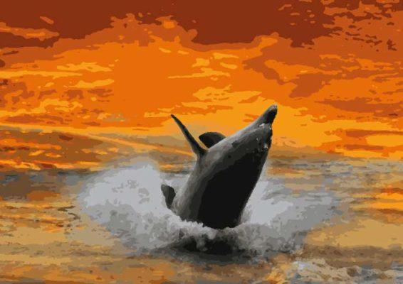 malen nach zahlen delphin gratis herunterladen