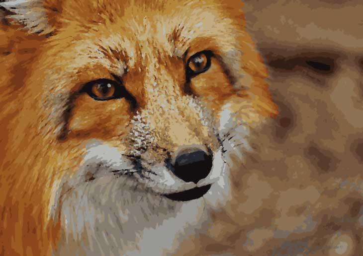 Malen Nach Zahlen Fuchs Gratis Zum Ausdrucken