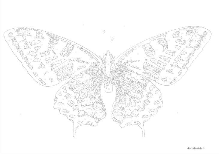 Malen Nach Zahlen Schmetterling Kostenlos Herunterladen