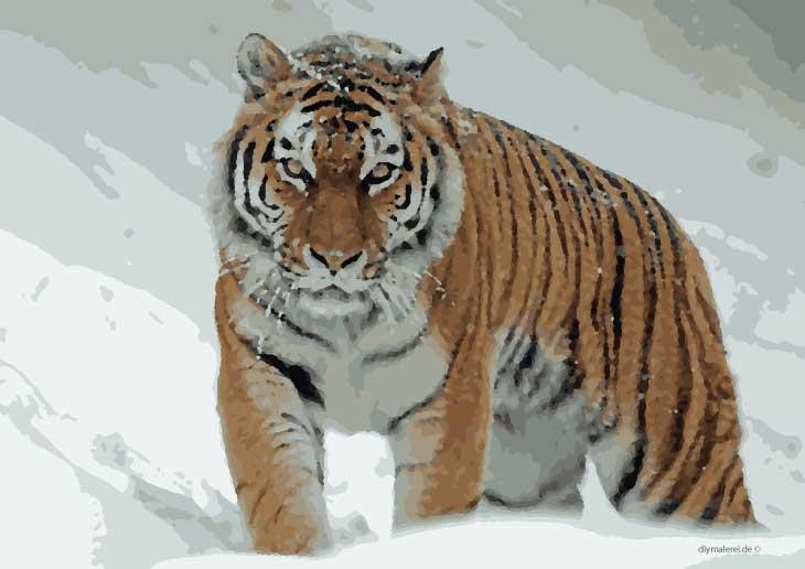 malen nach zahlen tiger zum ausdrucken kostenlos herunterladen